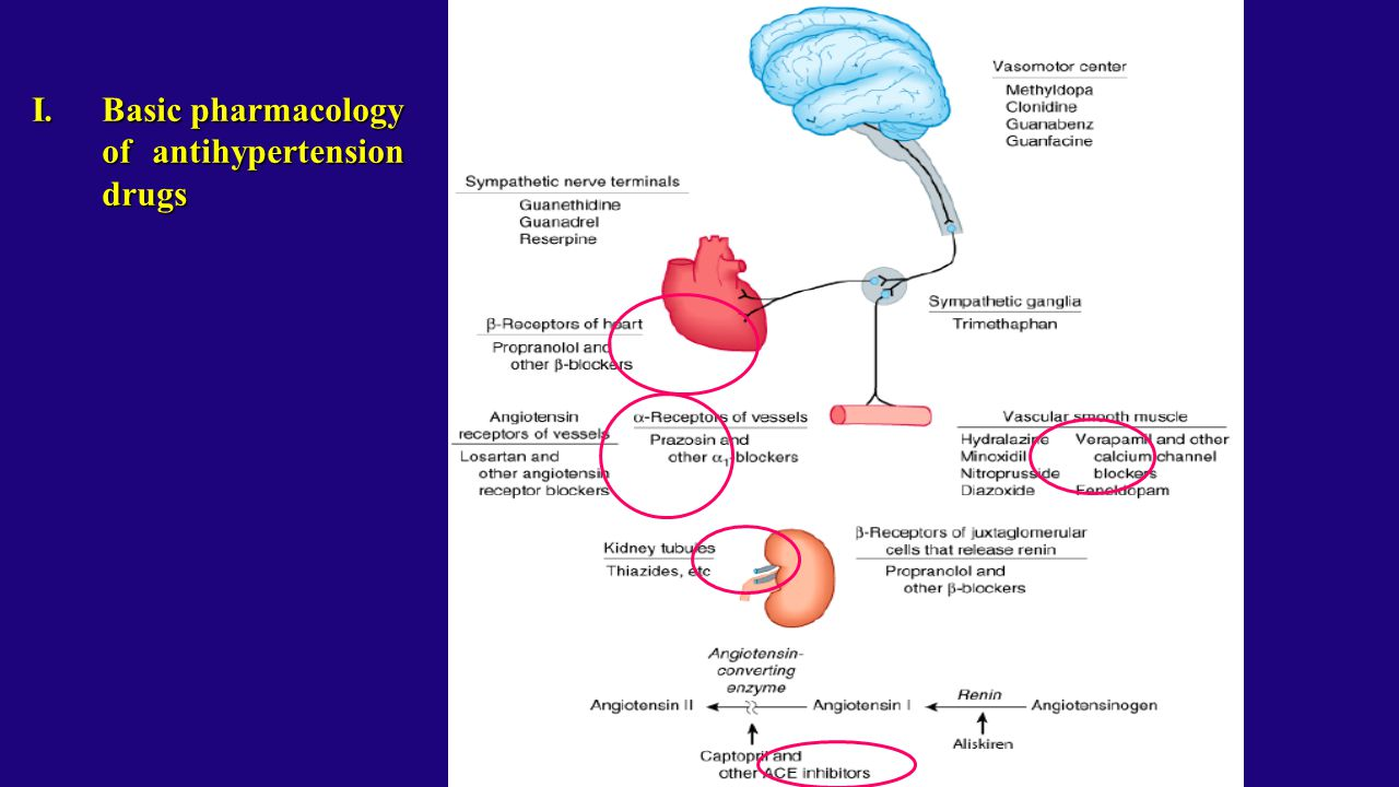 Basic pharmacology of antihypertension drugs