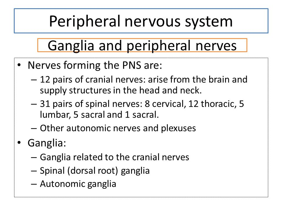 Ganglia and peripheral nerves