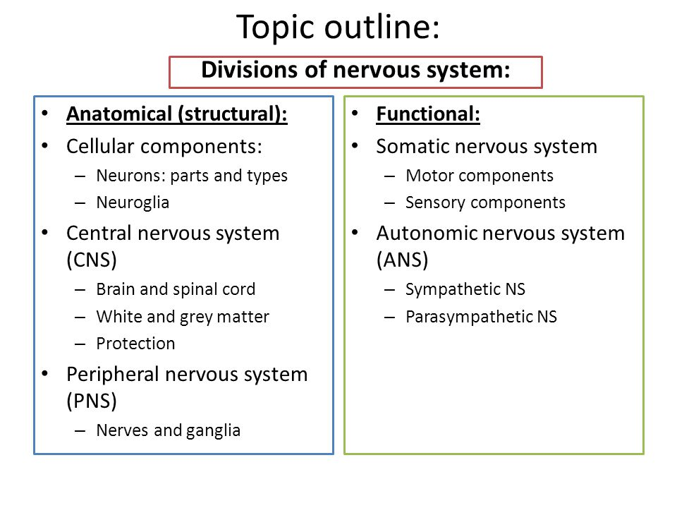Divisions of nervous system: