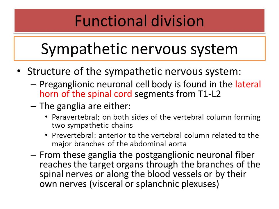 Sympathetic nervous system