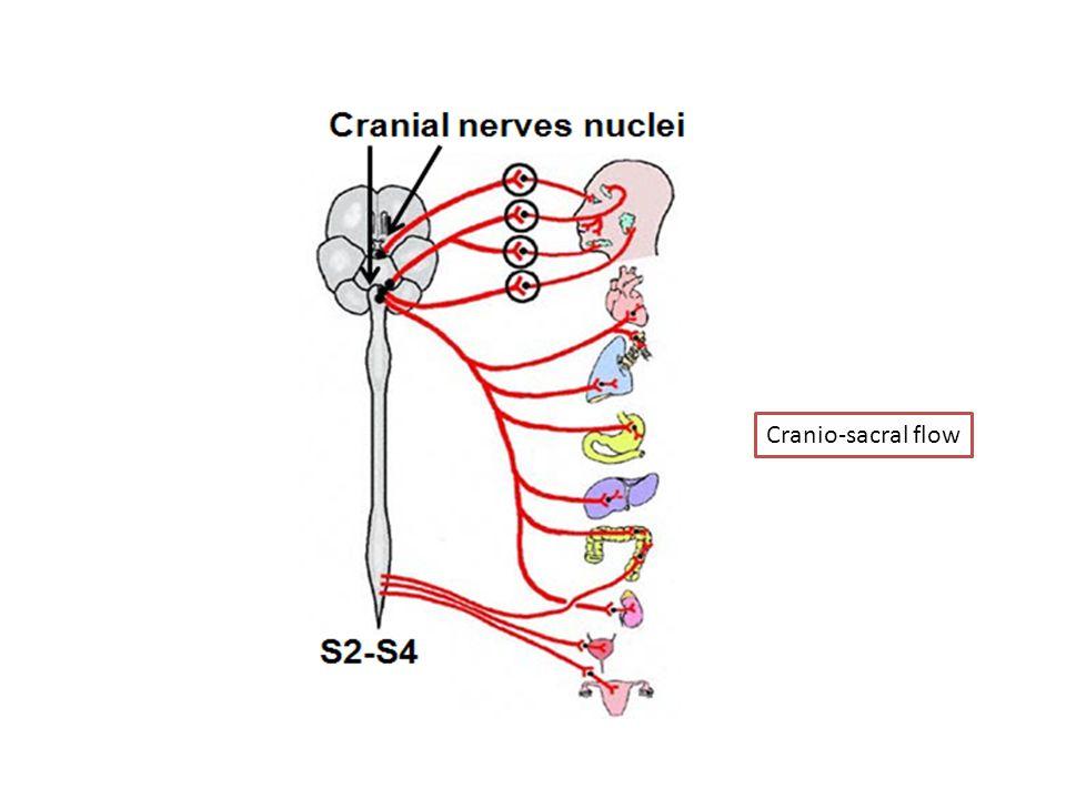 Cranio-sacral flow