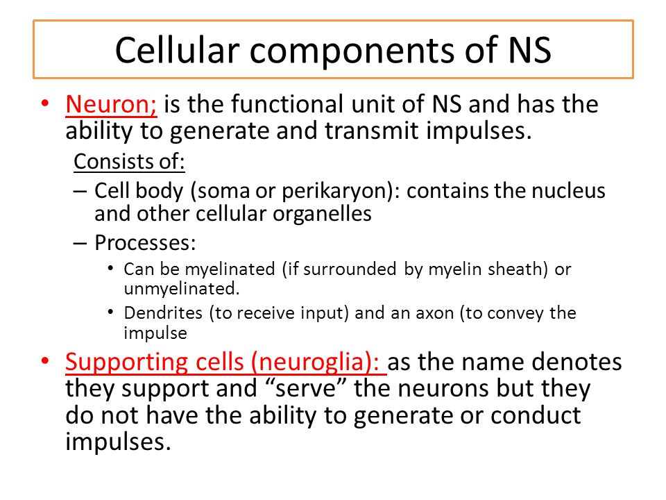 Cellular components of NS