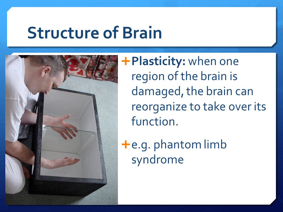 Structure of Brain Plasticity: when one region of the brain is damaged, the brain can reorganize to take over its function.