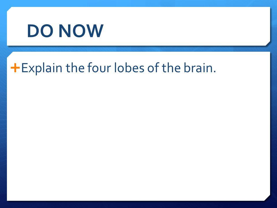 DO NOW Explain the four lobes of the brain.