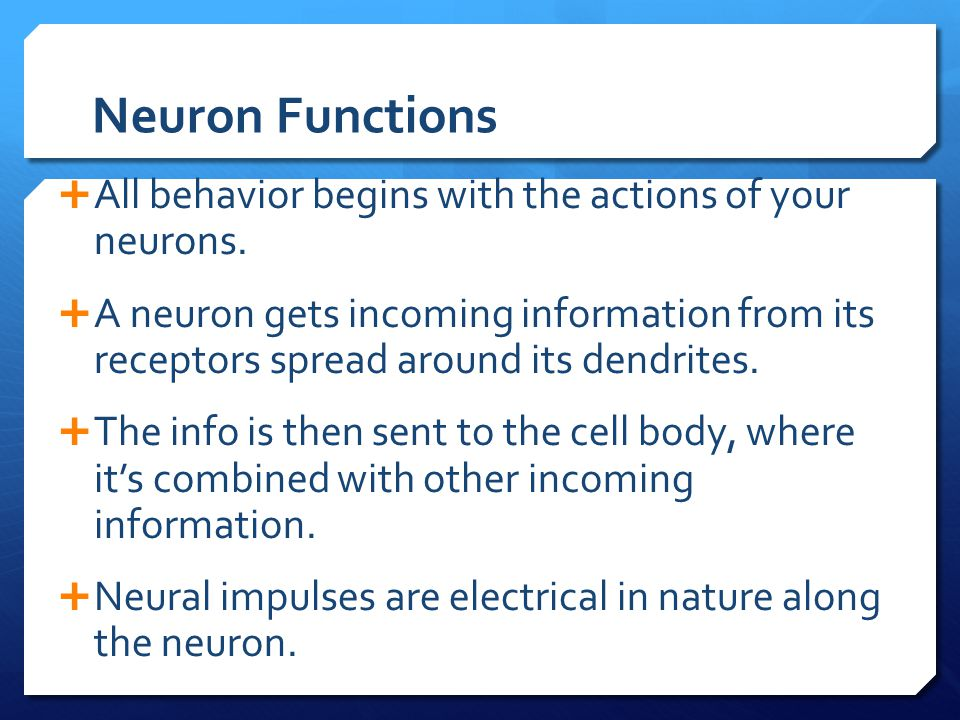 Neuron Functions All behavior begins with the actions of your neurons.
