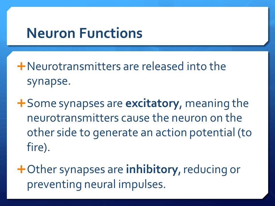 Neuron Functions Neurotransmitters are released into the synapse.