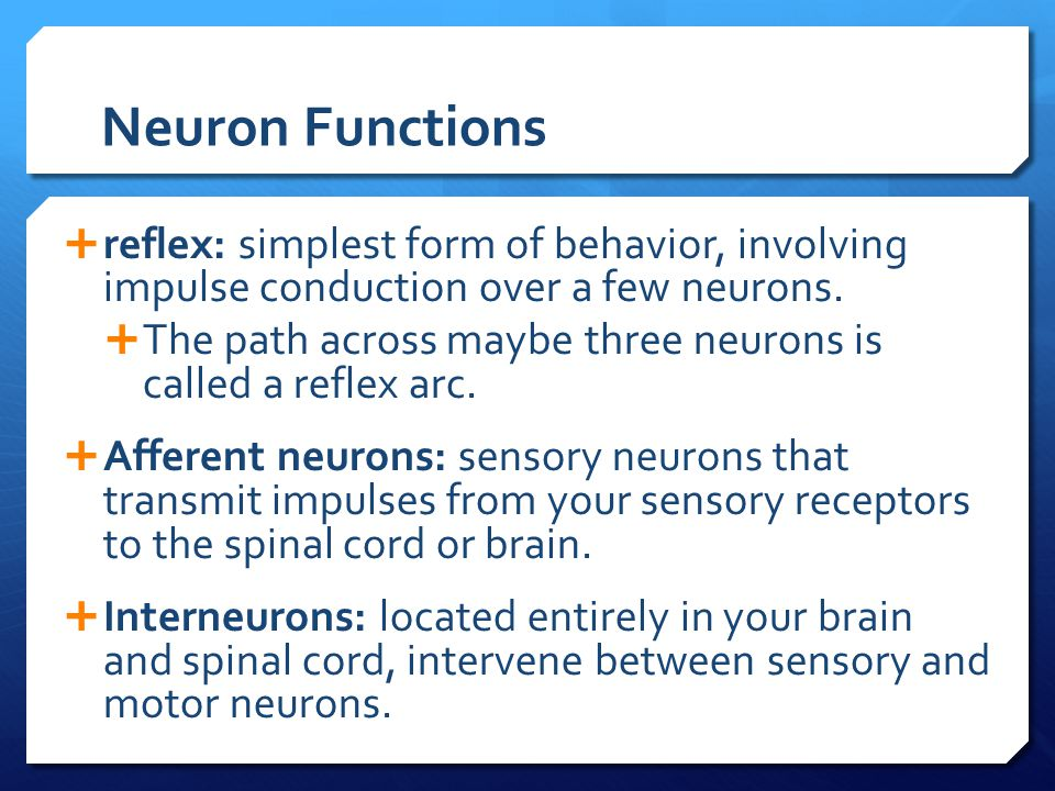 Neuron Functions reflex: simplest form of behavior, involving impulse conduction over a few neurons.