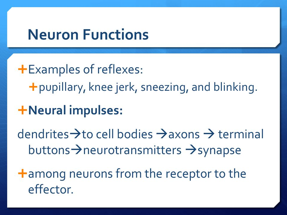 Neuron Functions Examples of reflexes: Neural impulses: