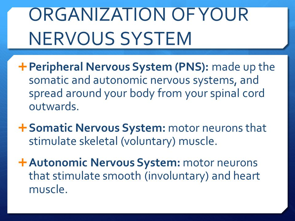 ORGANIZATION OF YOUR NERVOUS SYSTEM