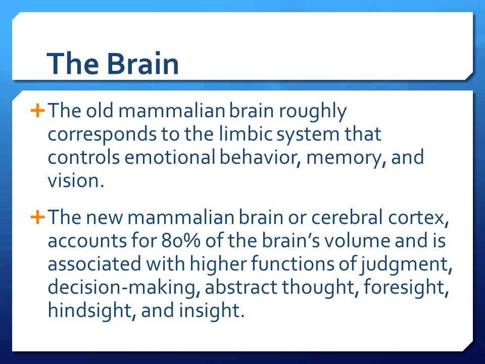 The Brain The old mammalian brain roughly corresponds to the limbic system that controls emotional behavior, memory, and vision.