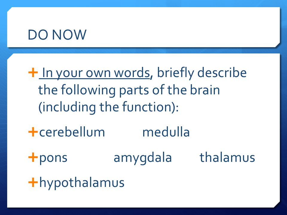 DO NOW In your own words, briefly describe the following parts of the brain (including the function):