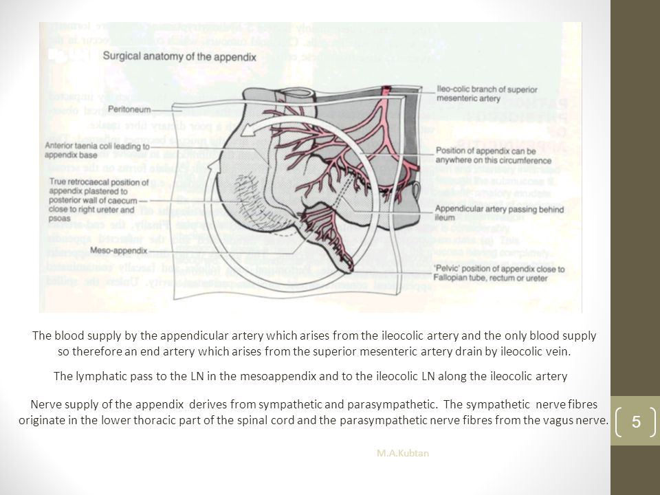 The blood supply by the appendicular artery which arises from the ileocolic artery and the only blood supply so therefore an end artery which arises from the superior mesenteric artery drain by ileocolic vein.