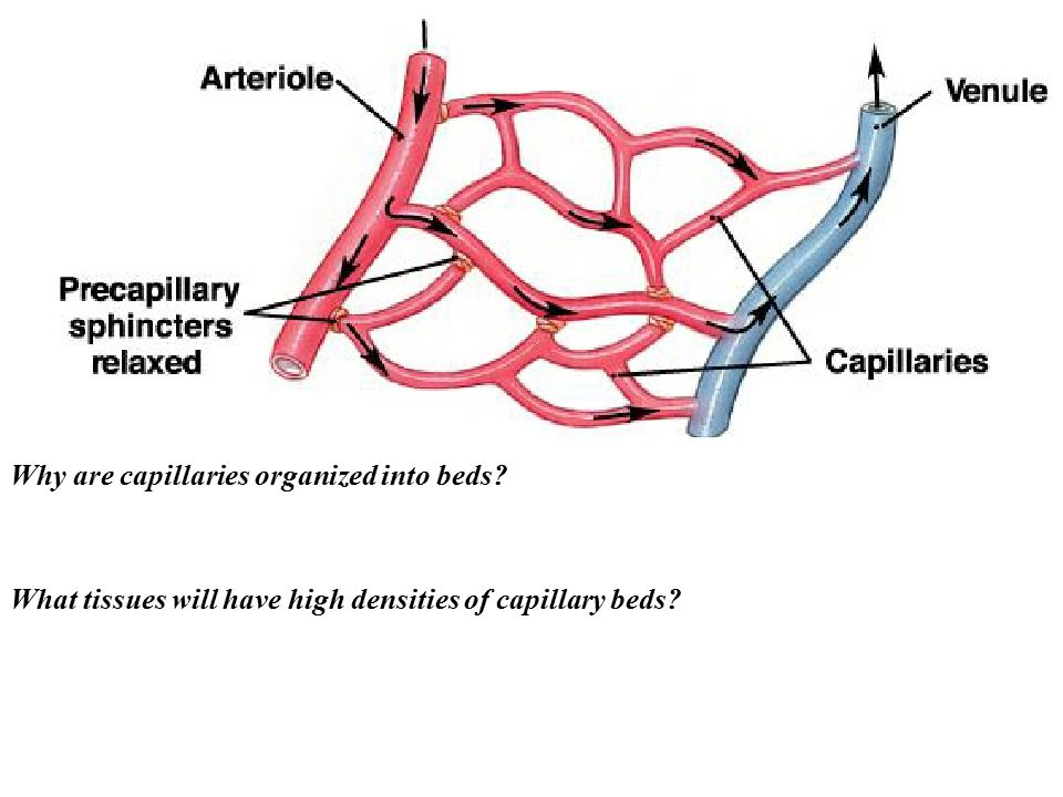 Why are capillaries organized into beds