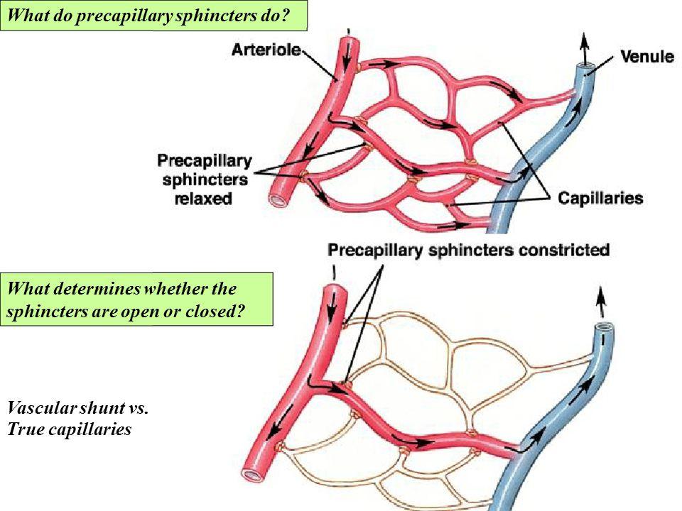 What do precapillary sphincters do