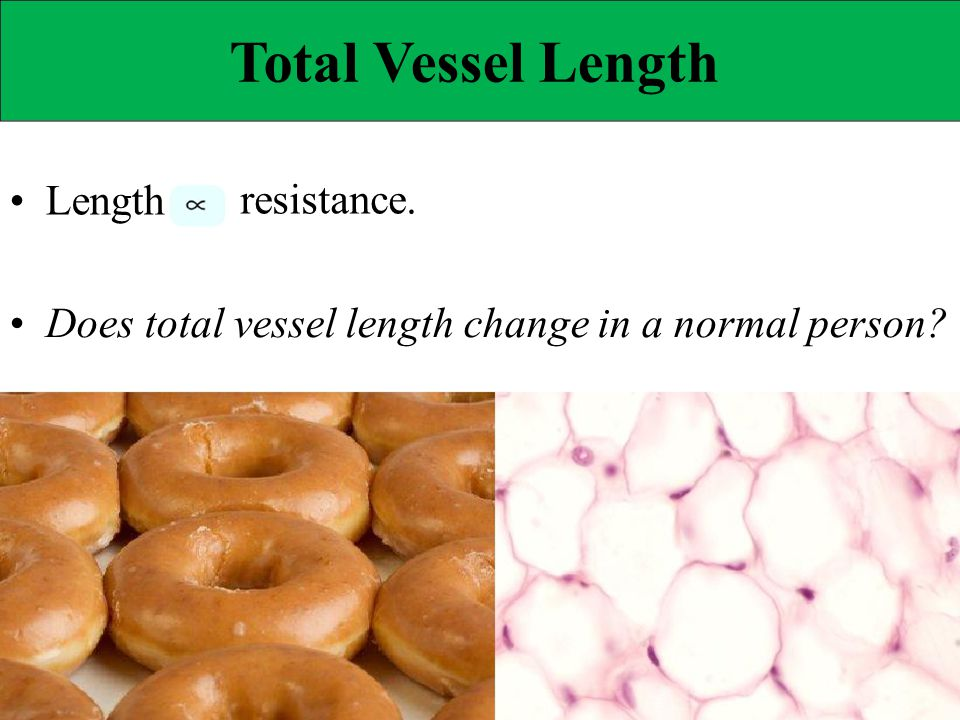 Total Vessel Length • Length resistance.