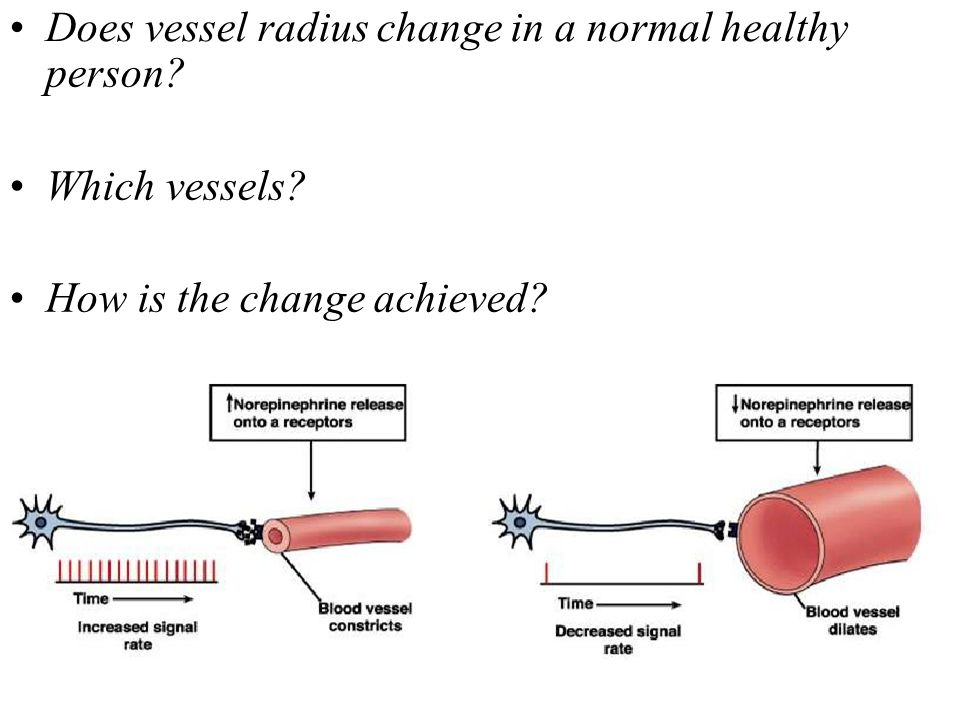 • Does vessel radius change in a normal healthy