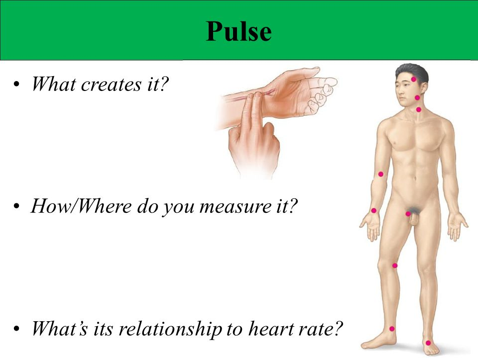 Pulse • What creates it • How/Where do you measure it