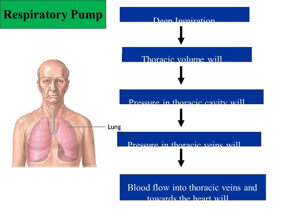 Respiratory Pump Pressure in thoracic veins will…