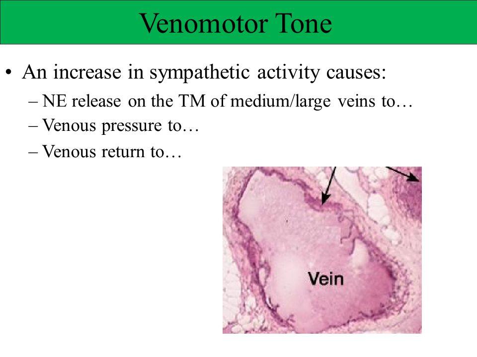 Venomotor Tone • An increase in sympathetic activity causes: