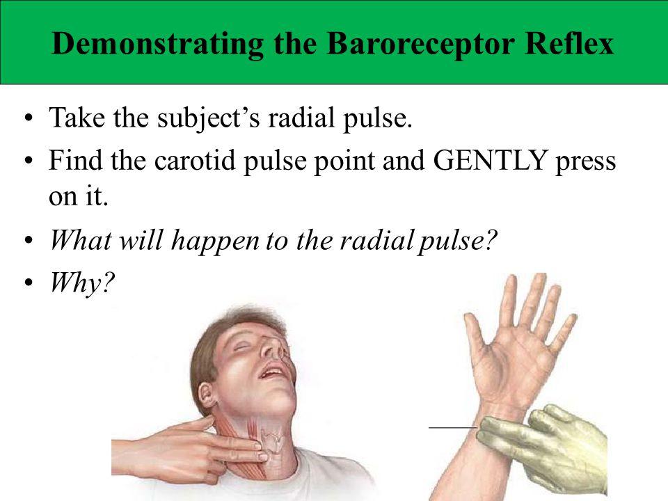 Demonstrating the Baroreceptor Reflex