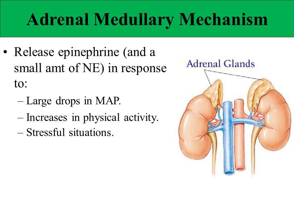 Adrenal Medullary Mechanism