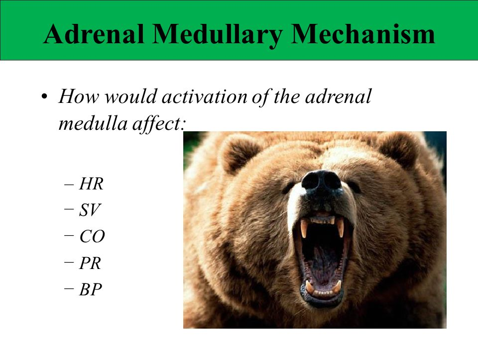 • How would activation of the adrenal
