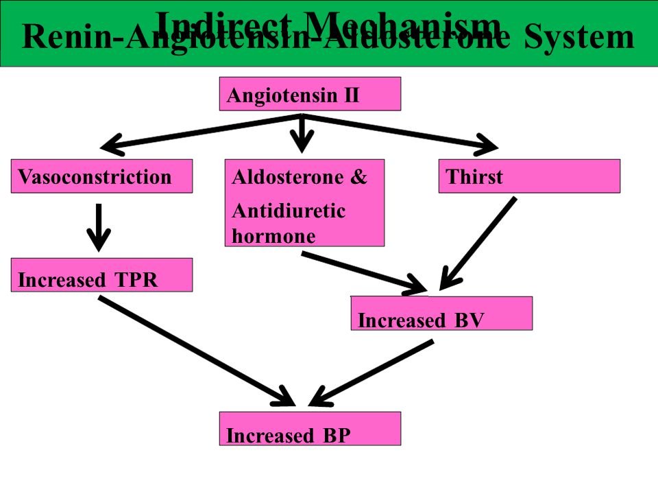 Indirect Mechanism Renin-Angiotensin-Aldosterone System