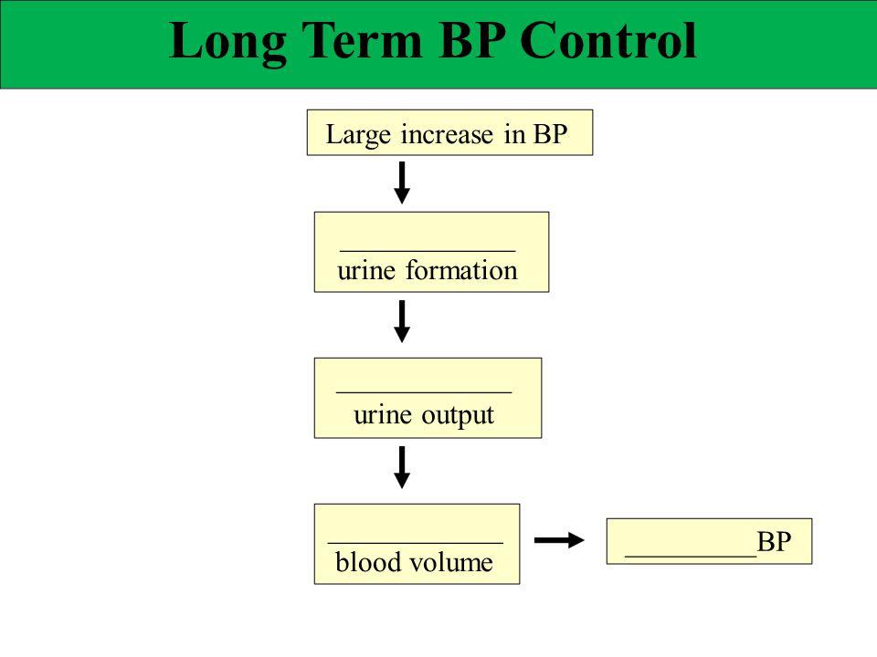Long Term BP Control ____________ _________BP Large increase in BP