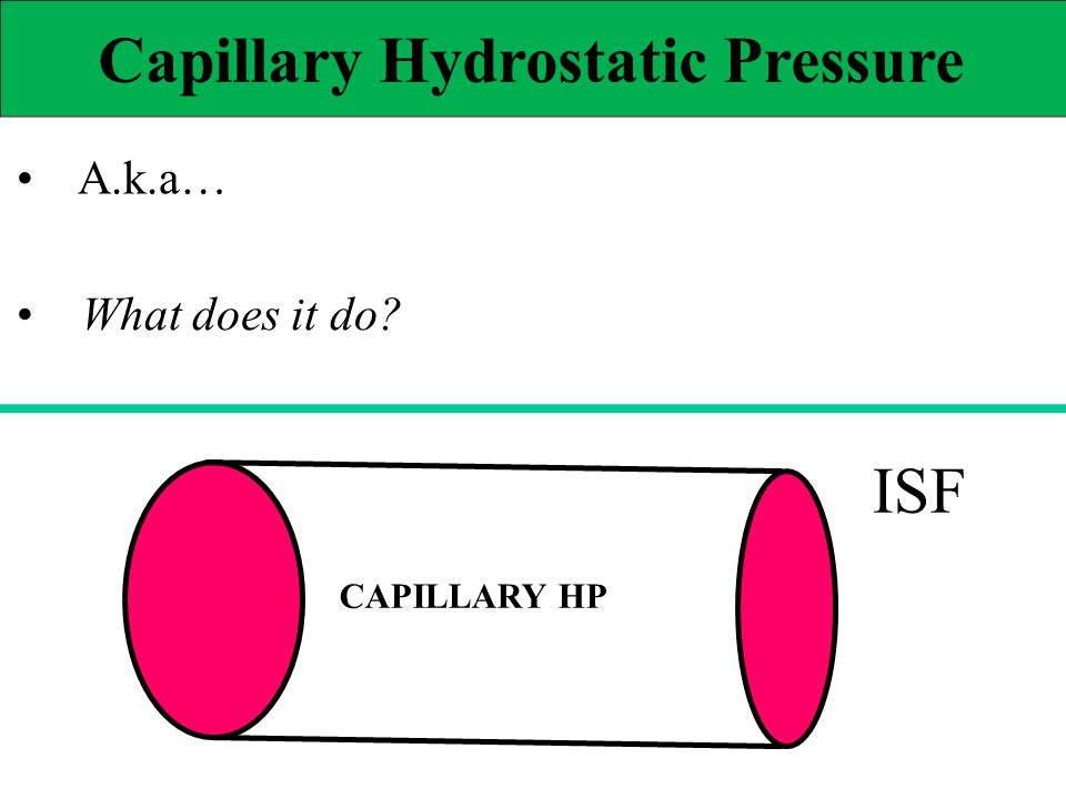 Capillary Hydrostatic Pressure