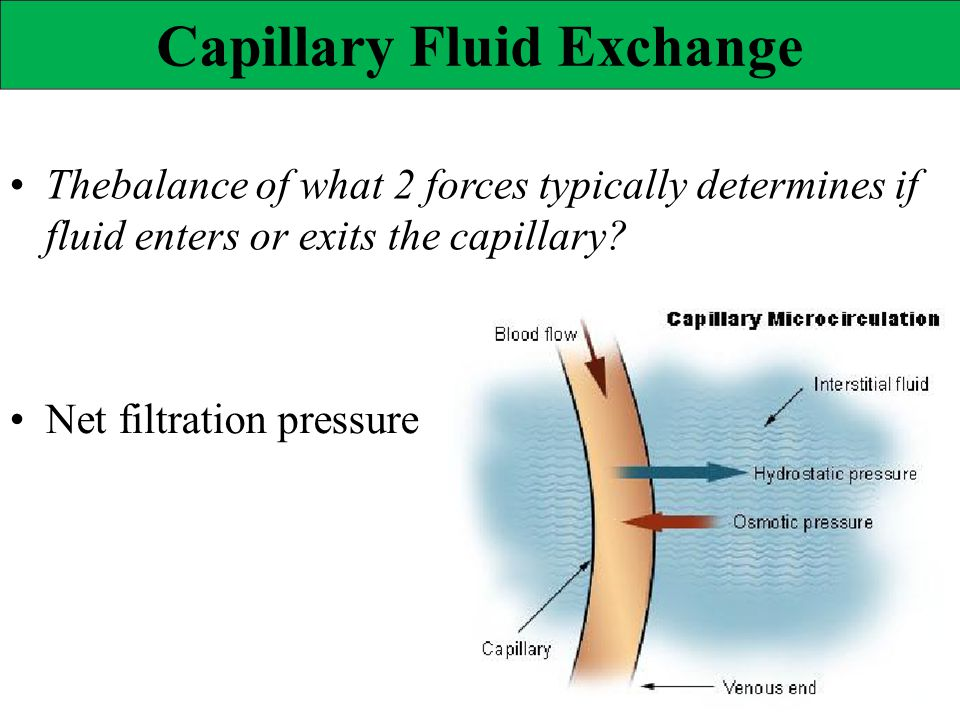 Capillary Fluid Exchange