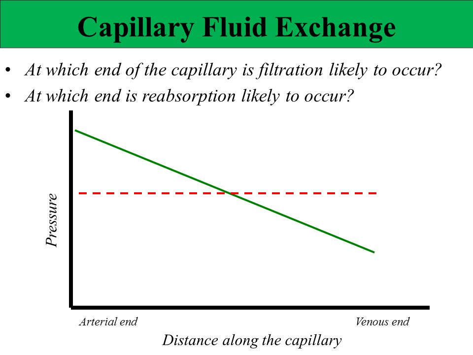 • At which end of the capillary is filtration likely to occur