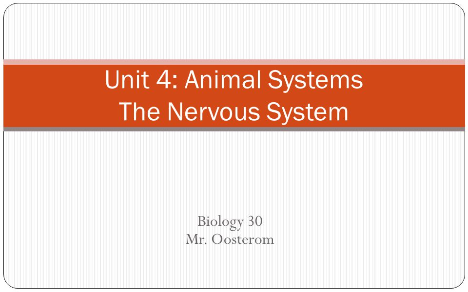 Unit 4: Animal Systems The Nervous System