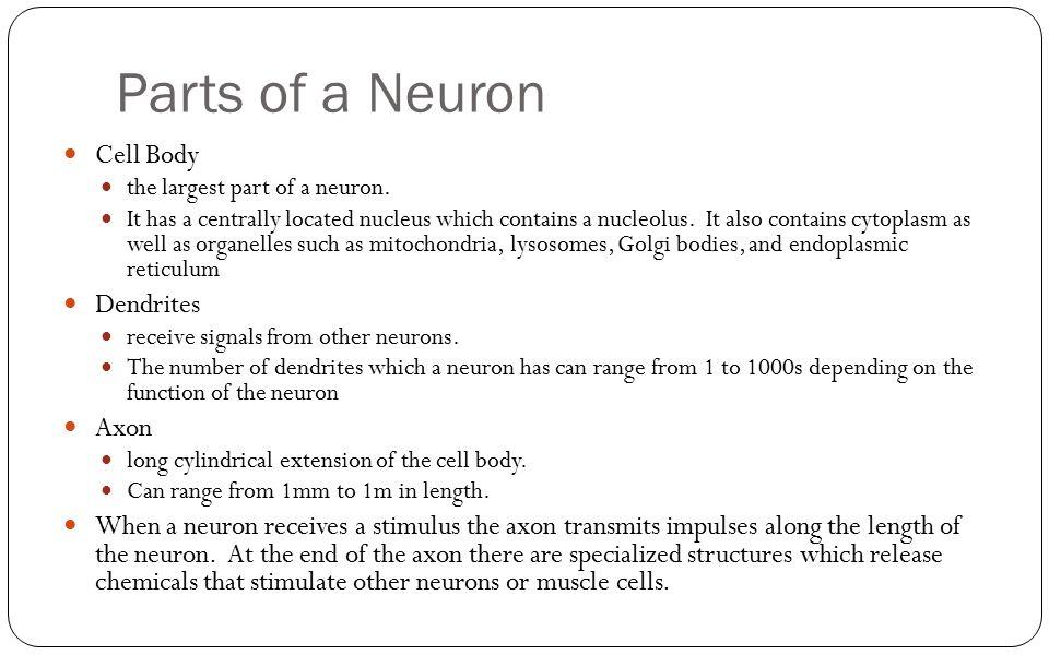 Parts of a Neuron Cell Body Dendrites Axon