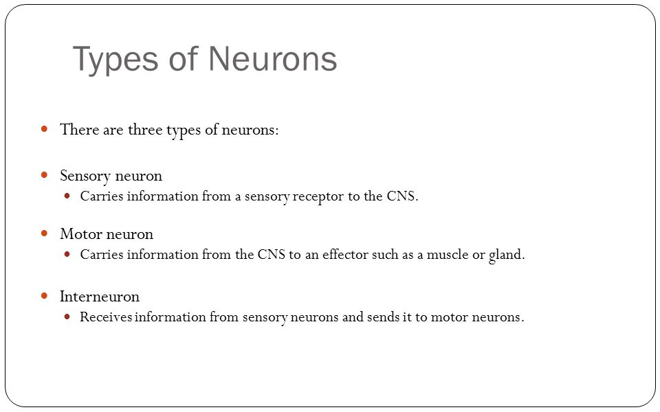 Types of Neurons There are three types of neurons: Sensory neuron
