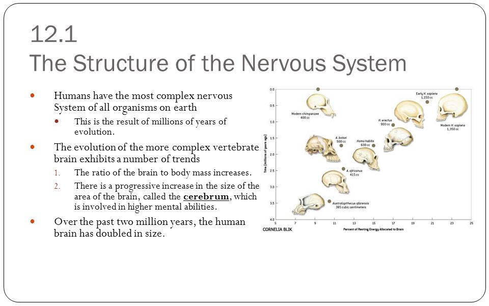 12.1 The Structure of the Nervous System