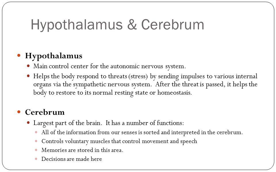 Hypothalamus & Cerebrum