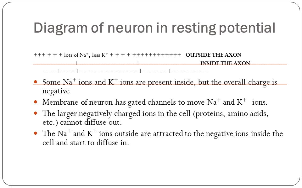 Diagram of neuron in resting potential