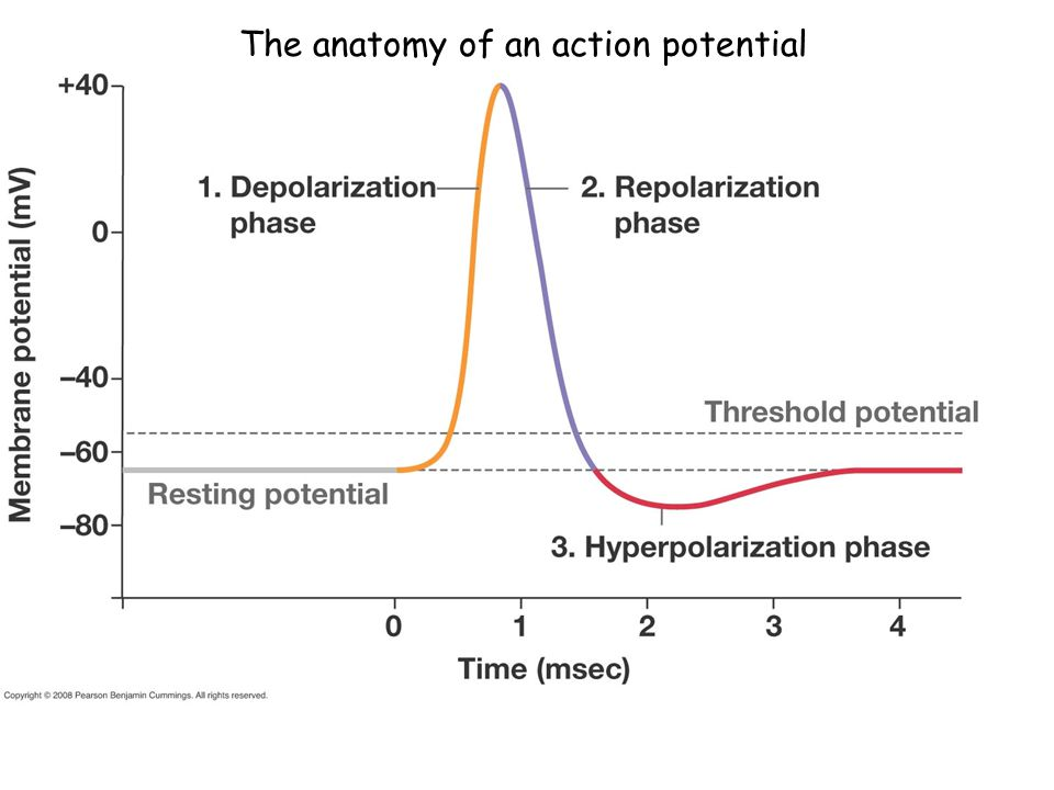 The anatomy of an action potential
