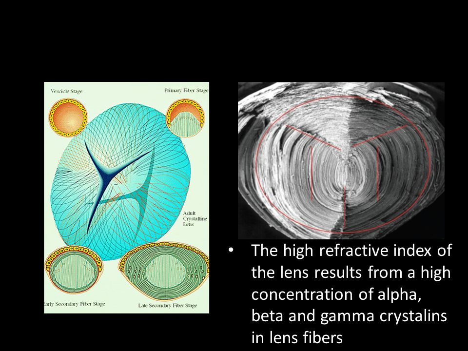 The high refractive index of the lens results from a high concentration of alpha, beta and gamma crystalins in lens fibers