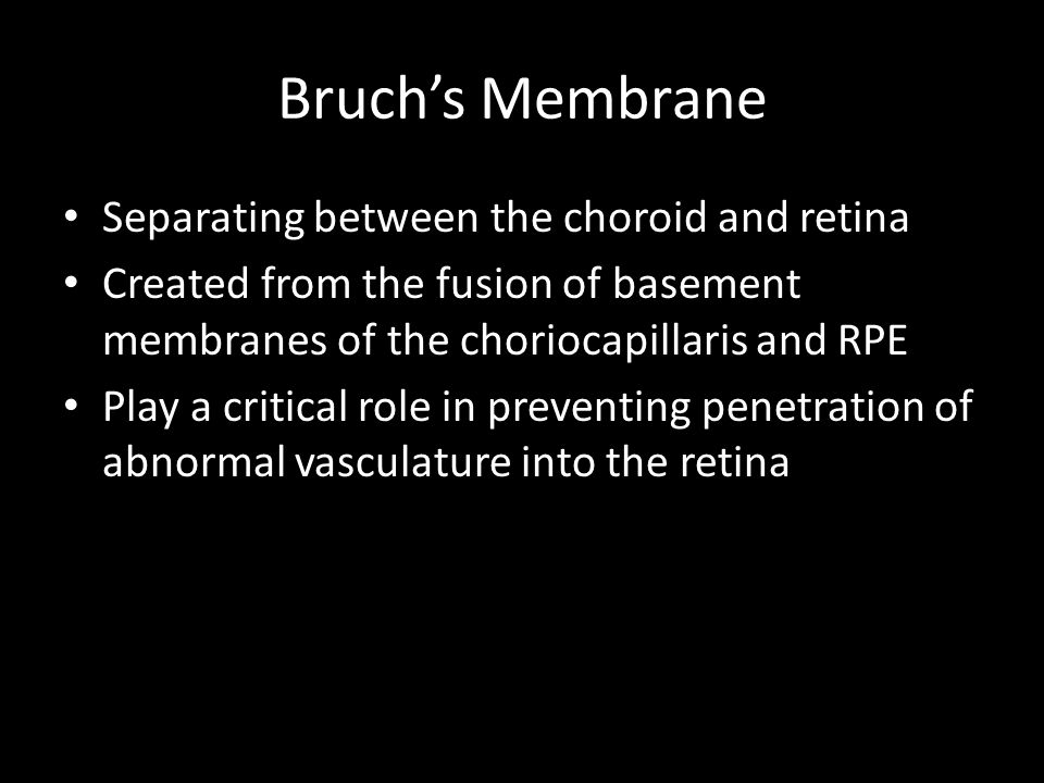 Bruch's Membrane Separating between the choroid and retina