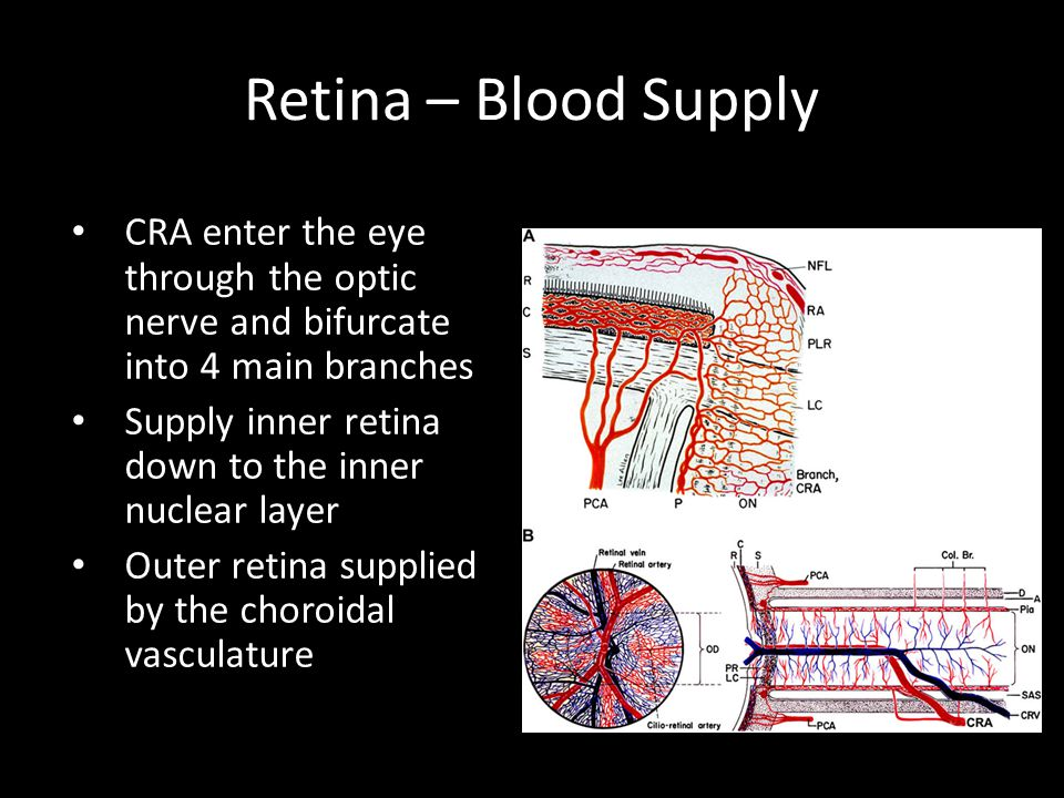 Retina – Blood Supply CRA enter the eye through the optic nerve and bifurcate into 4 main branches.