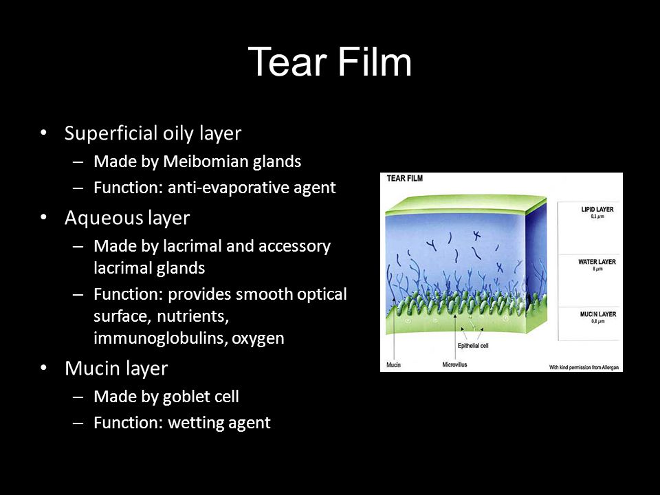 Tear Film Superficial oily layer Aqueous layer Mucin layer