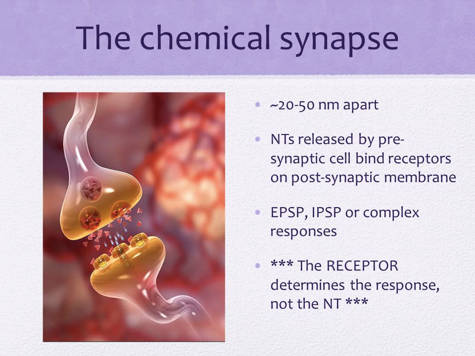 The chemical synapse ~20-50 nm apart