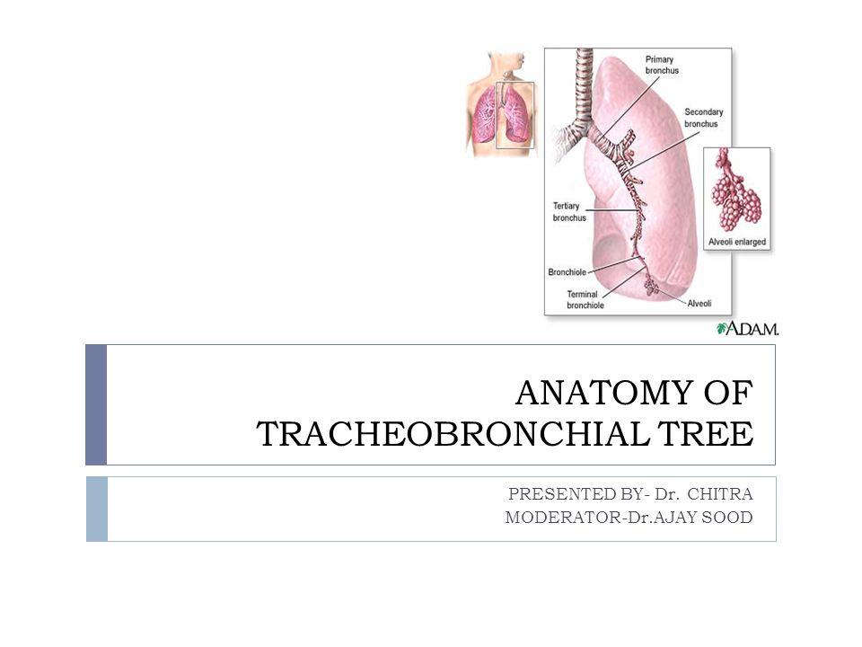ANATOMY OF TRACHEOBRONCHIAL TREE