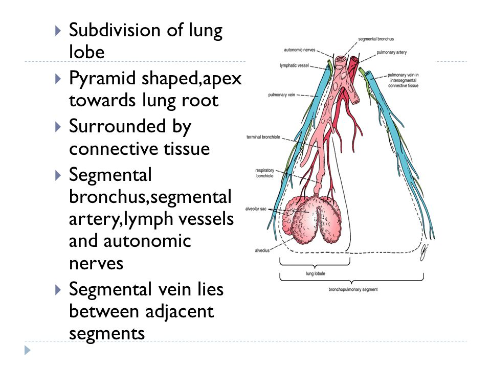 Subdivision of lung lobe