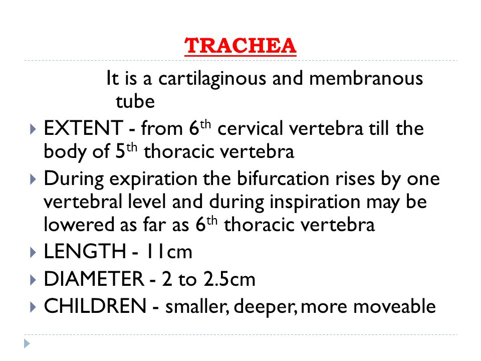 TRACHEA It is a cartilaginous and membranous tube. EXTENT - from 6th cervical vertebra till the body of 5th thoracic vertebra.