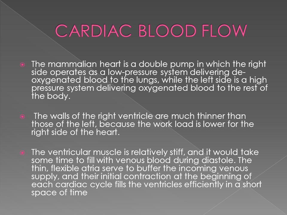 CARDIAC BLOOD FLOW