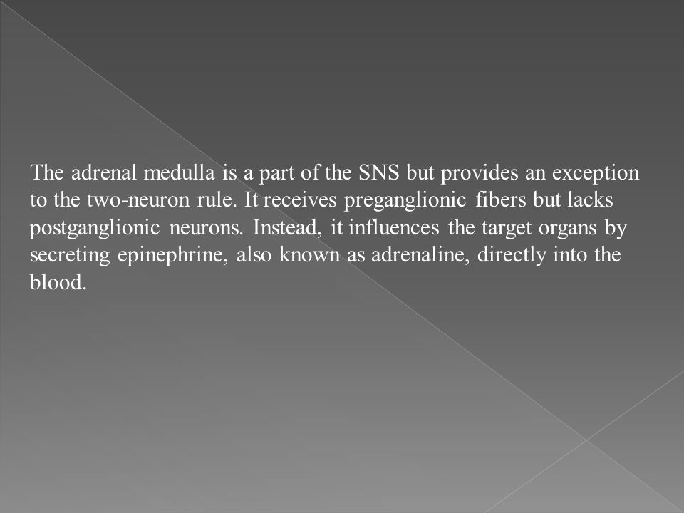 The adrenal medulla is a part of the SNS but provides an exception to the two-neuron rule.