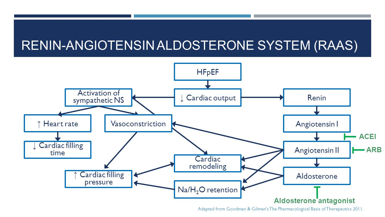 Renin-angiotensin aldosterone System (RAAS)