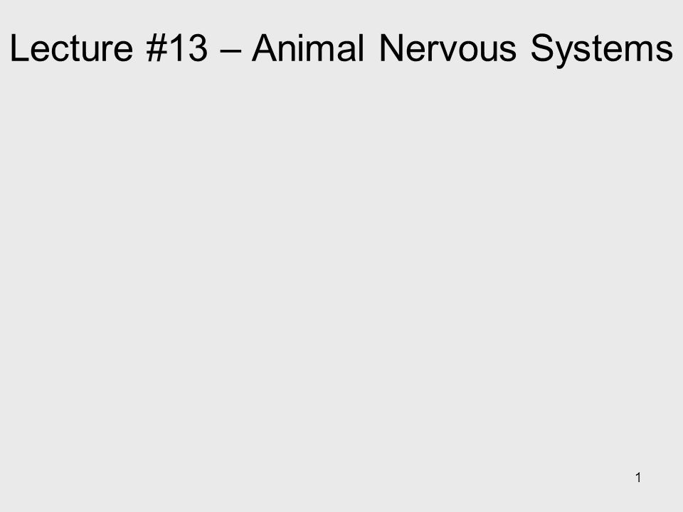 Lecture #13 – Animal Nervous Systems